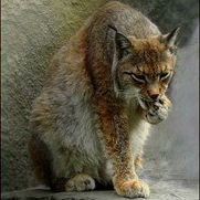 http://wolfesmag.mybb.ru/img/avatars/0014/4a/8f/4-1404385981.jpg