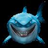 shark507